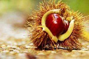 castanyes castañas salut dental tardor otoño dentista